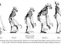 Charles Darwin's 'On the Origin of Species'