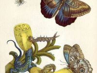 Maria Sibylla Merian and her Love for Nature's Details