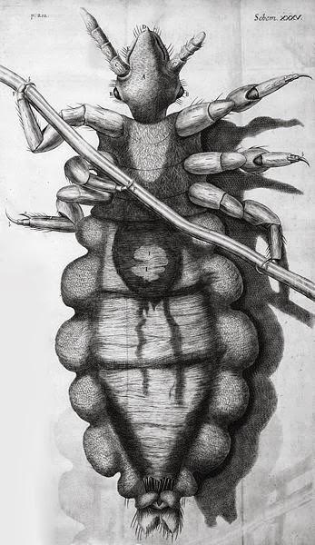 Hooke's Louse Diagram