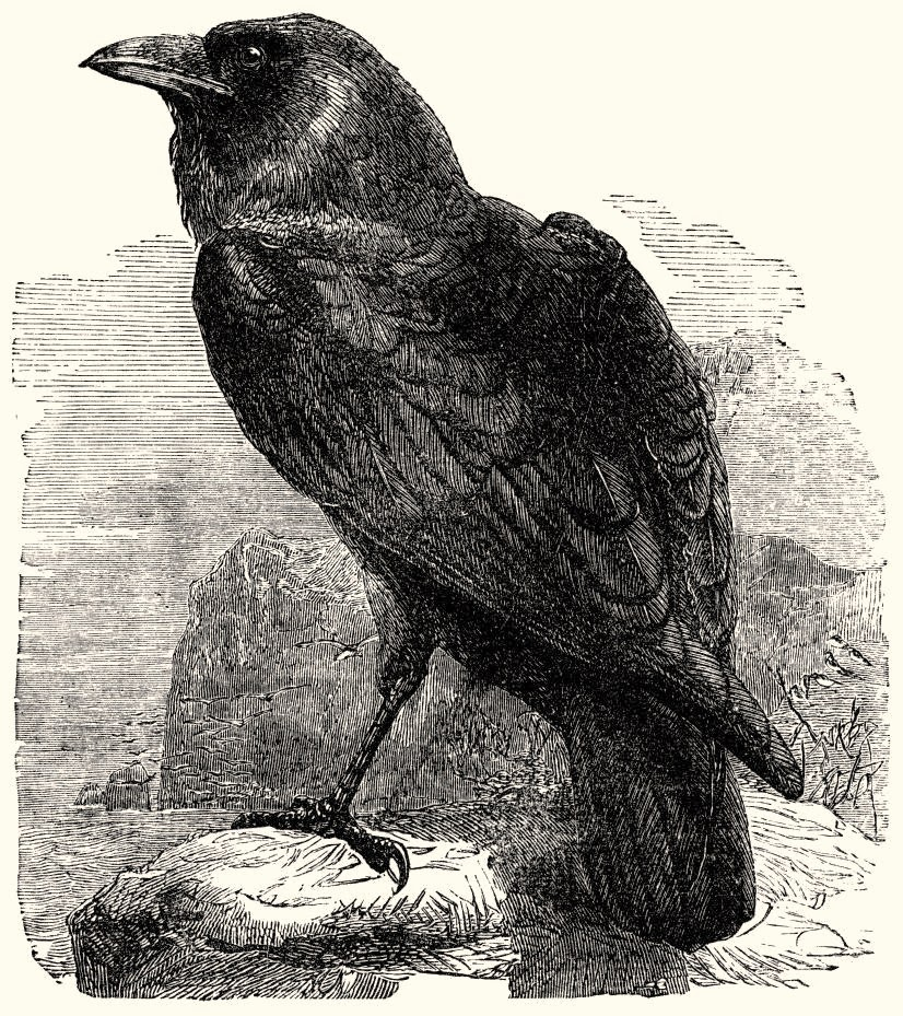 """Quoth the Raven """"Nevermore"""""""