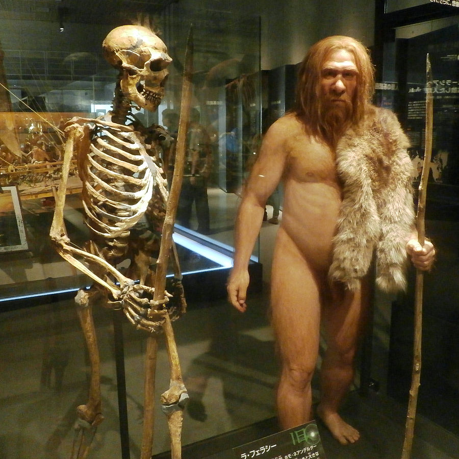 Skeleton and restoration model of the La Ferrassie 1 Neanderthal man