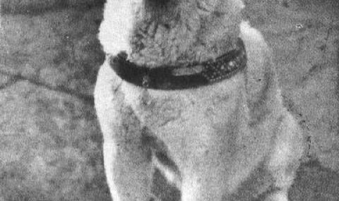 Hachiko – the Most Famous Dog of Japan
