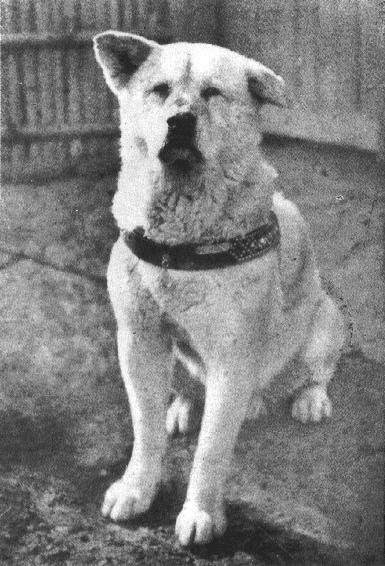 Hachiko - the Most Famous Dog of Japan