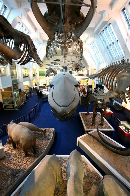 Wide-angle picture of the Large Mammals Hall at the (British) Natural History Museum, taken from the balcony above the blue whale model.