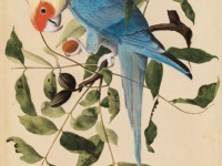 John James Audubon's Birds of America