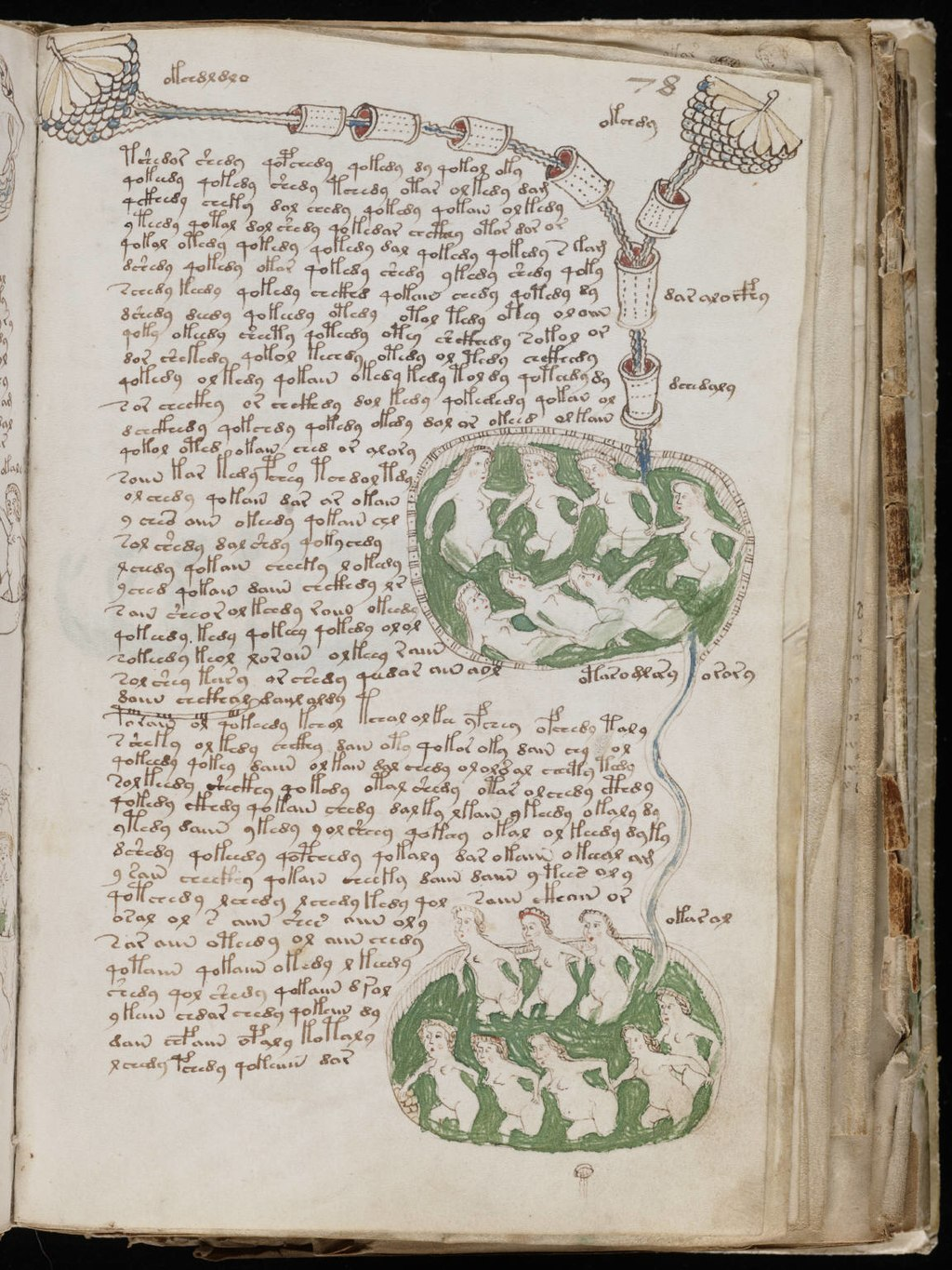 Another page from the mysterious Voynich manuscript from the so-called anatomical section