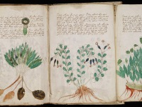 The Secrets of the mysterious Voynich Manuscript