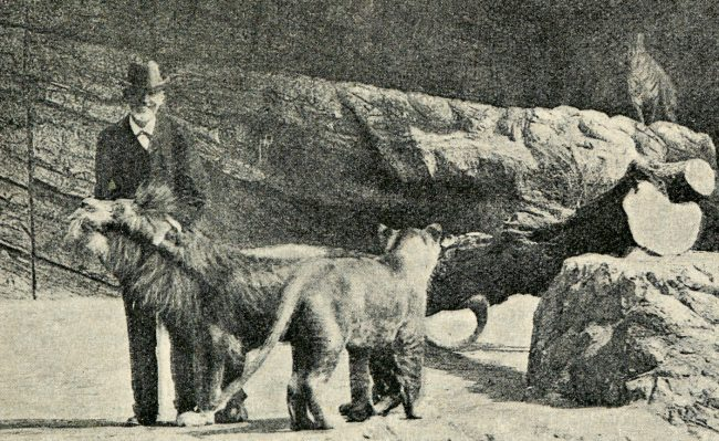 Hagenbeck with his lions
