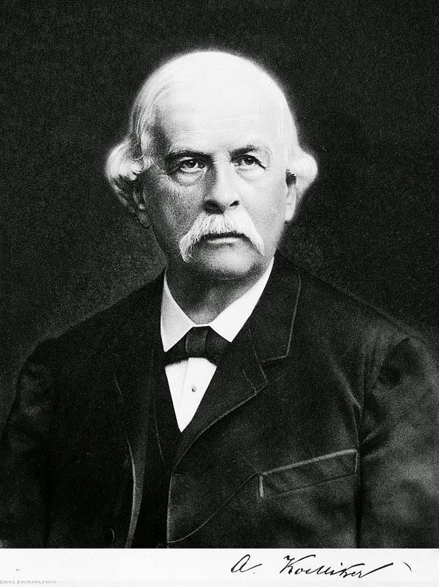 Rudolf von Kölliker (1817-1902)