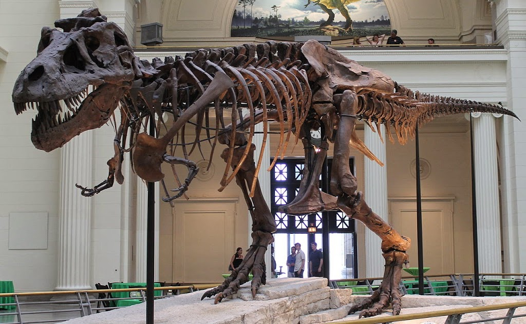 Meet Sue, the Dinosaur
