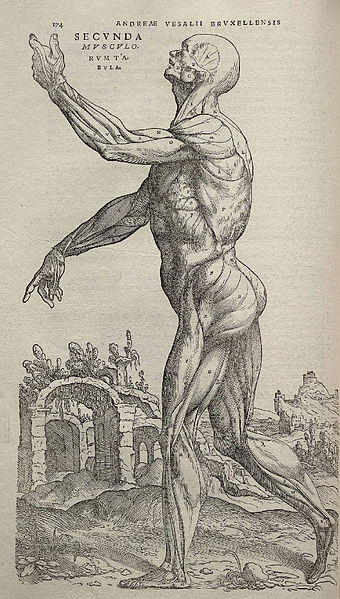 Andreas Vesalius and the Science of Anatomy - SciHi BlogSciHi Blog