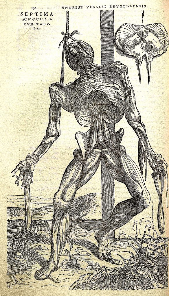 Vesalius's Fabrica contained many intricately detailed drawings of human dissections, often in allegorical poses.