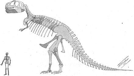 Skeletal restoration by William D. Matthew from 1905, published alongside Osborn's description paper
