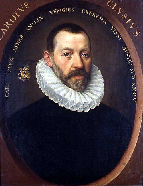 Charles de l'Écluse (lat. Carolus Clusius, 1526-1609)