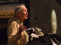 Jane Goodall and the True Nature of Chimpanzees