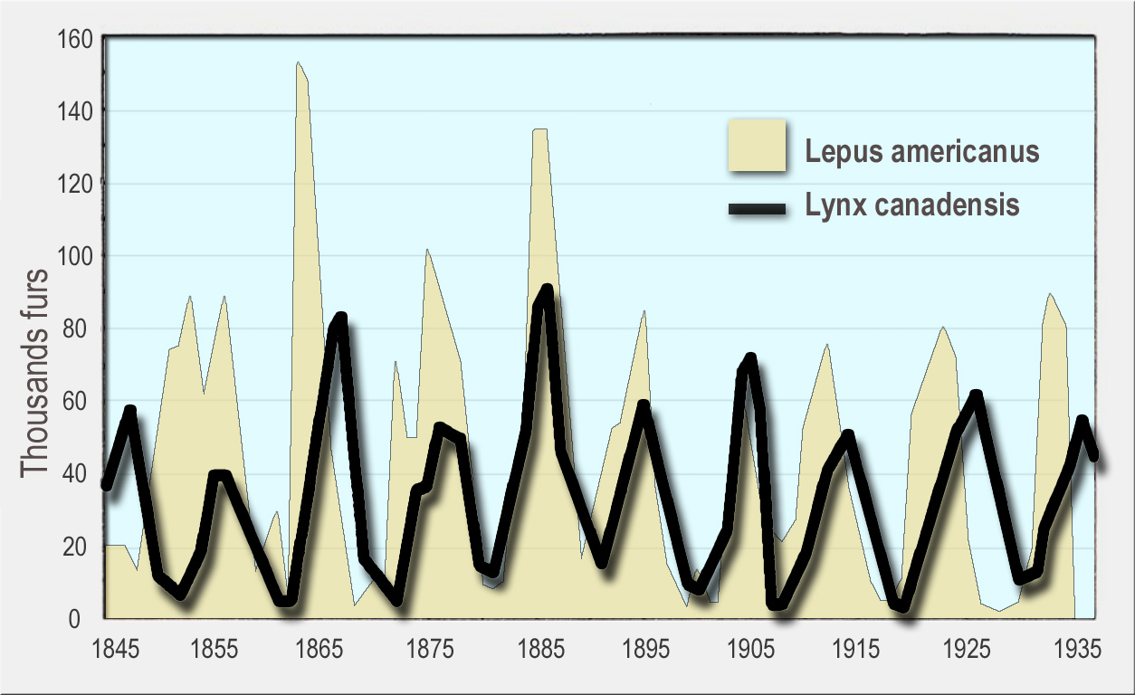 Numbers of snowshoe hare (yellow, background) and Canada lynx (black line, foreground) furs sold to the Hudson's Bay Company. Canada lynxes eat snowshoe hares.