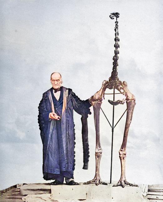Richard Owen with the Giant Moa Skeleton (1879)