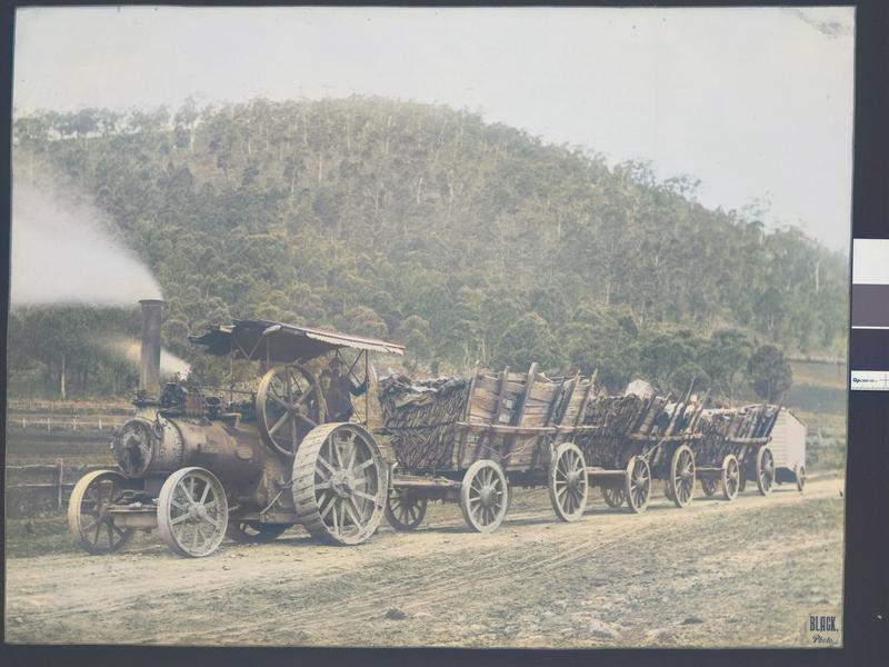 Steam traction engine at Mt Warrenheip near Ballarat