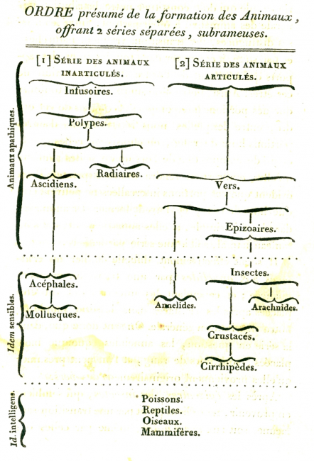 Branching diagram depicting two series of animal origins, from the Histoire naturelle des animaux sans vertèbres of Jean-Baptiste Lamarck (1815)