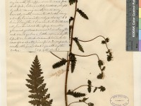 Catherine Furbish and the Native Flora of Maine