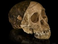 The Discovery of the Taung Child
