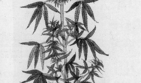 Leonhart Fuchs' Herbal Book