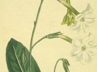 Edward Murray East and the Hybrid Corn
