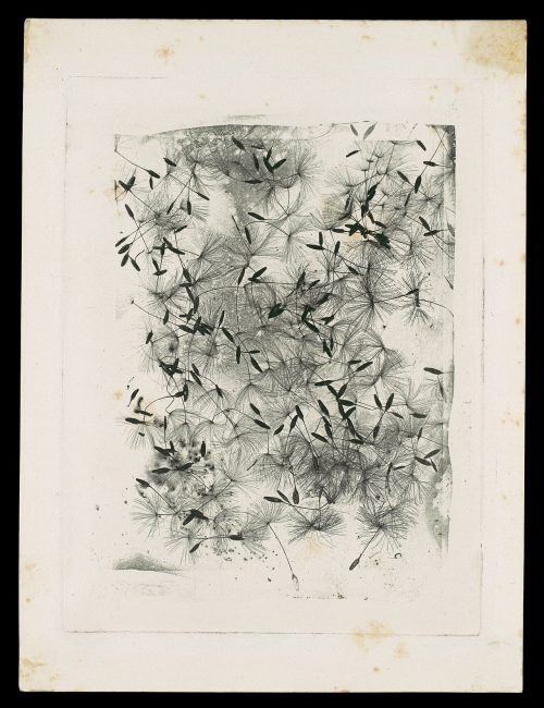 Dandelion Seeds Date1858 or after 1858 Medium photogravure (photoglyphic engraving from a copper plate)