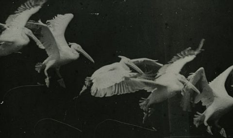 Étienne-Jules Marey and the Chronophotographic Gun