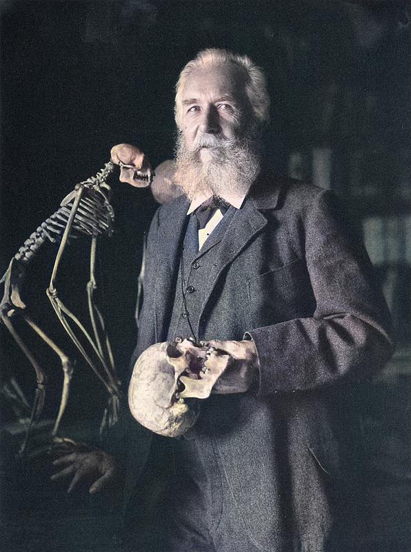 Ernst Haeckel (1837 - 1919)