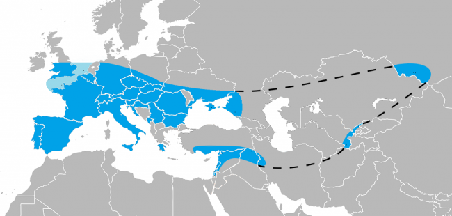 The known range of Neanderthals, as estimated with their identifiable bones only (not stone tools). For sources and a long description, see the colour version, which is also more up-to-date: The known range of Neanderthals in Europe (blue), Southwest Asia (orange), Uzbekistan (green), and the Altai Mountains (violet).