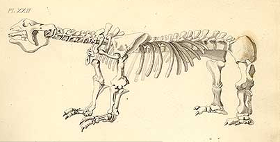 Megatherium fossil illustrated in James Parkinson's Organic Remains of a Former World